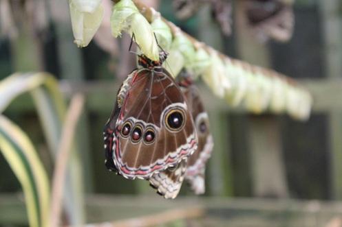 butterflyworld10