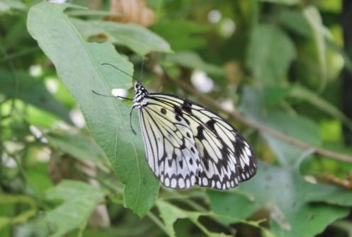 butterflyworld3