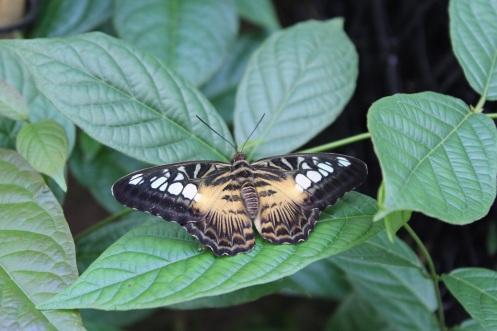 butterflyworld4