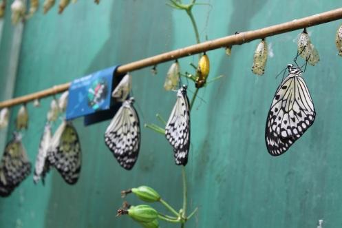 butterflyworld6