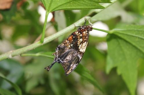 butterflyworld12