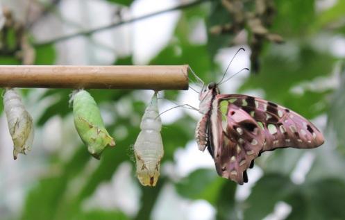 butterflyworld13