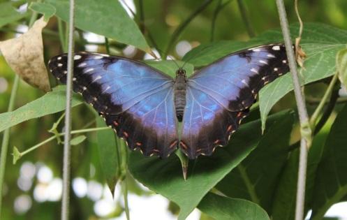 butterflyworld25