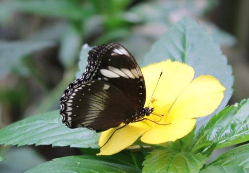 butterflyworld27
