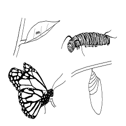 Paintedlady Coloring Page - Free Butterfly Coloring Pages ... | 250x250