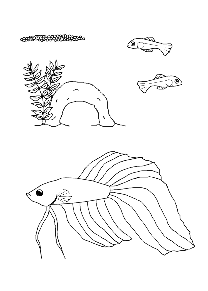 Free Life Cycle Coloring Pages  StuwahaCreations